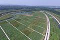 异位处理 ---新密市双洎河人工湿地项目